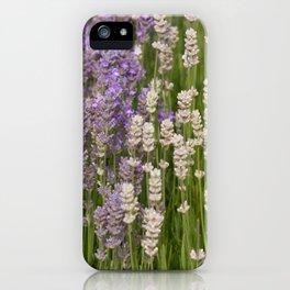 Lavender & White Lavender iPhone Case