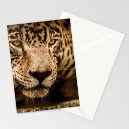 Magnificent Adorable Fearsome Adult Leopard Face Close Up Ultra HD Stationery Cards