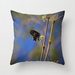 Spicebush Swallowtail I Throw Pillow