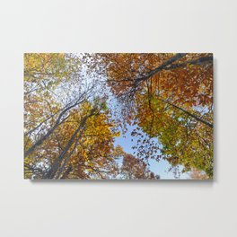 """Up in the air"". Forest colors Metal Print"