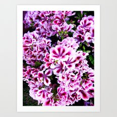 Martha Washington Geranium I Art Print