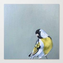 Stay Gold Finchy-Boy Canvas Print