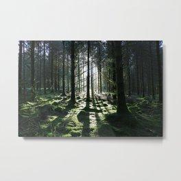 Sunlight Through Trees Metal Print