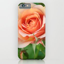 Garden pink rose flower blooming and two rose buds iPhone Case