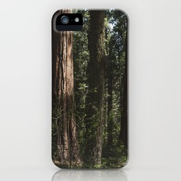 Sunlit California Redwood Forests iPhone Case