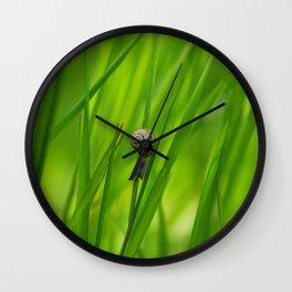 Little Snail in Gras Wall Clock
