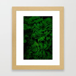Deep Forest Ferns Framed Art Print