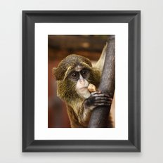 Young Debrazza's Monkey  Framed Art Print