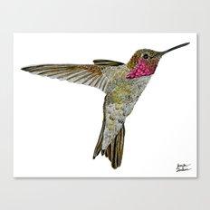 Hummingbird Ayre Canvas Print