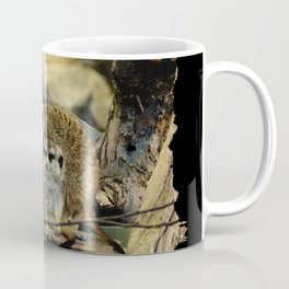 African Meerkat Trio Coffee Mug