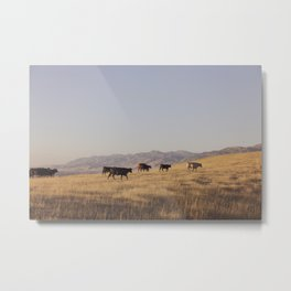 Western Cattle Art Metal Print