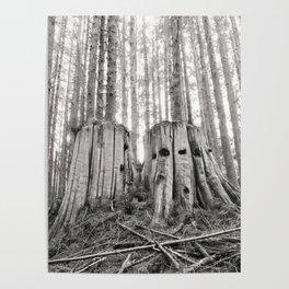 Nurse Stump Pacific Northwest Forest Cedar Trees Sepia Print Poster
