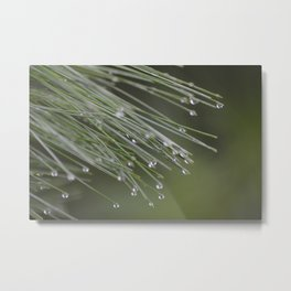 Raindrops on Pine Tree Macro Nature Photography - Anticipation Metal Print