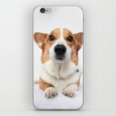 Dog -  iPhone & iPod Skin