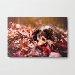 Playful Autumn Dog Metal Print