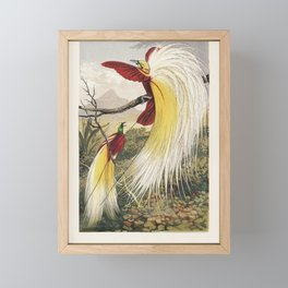 The Bird of Paradise by Benjamin Fawcett (1808-1893), two blindingly colorful birds full with feathe Framed Mini Art Print