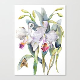 Vintage White Cattleya Orchids and Moth Poster Botanical Design Canvas Print