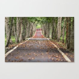 wood le chemin Canvas Print