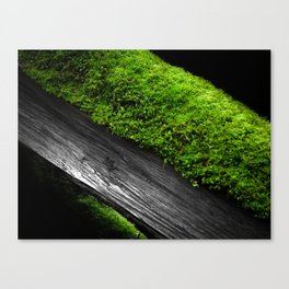 Deadfall Adornment Canvas Print