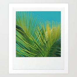 Dominican Palms Art Print