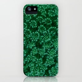 Green Queen Anne's Lace (Up Close) iPhone Case