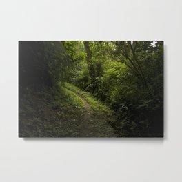 Green path Metal Print