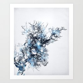 Wild Cosmos Art Print