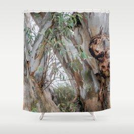 Red gum Shower Curtain
