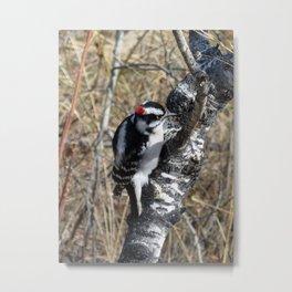 Downy Woodpecker on a Tree Metal Print