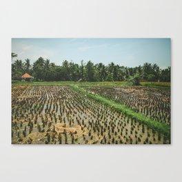 Rice Fields - Indonesia Canvas Print