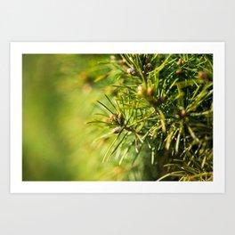Fir tree green background Art Print