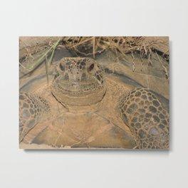 Alabama Gopher Tortoise Metal Print