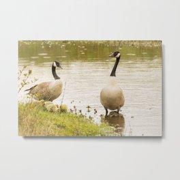 Nature wildlife family of ducks Metal Print