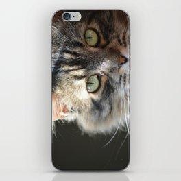 Brown Tabby Cat iPhone Skin