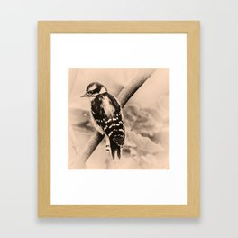Downy Woodpecker Chick Framed Art Print