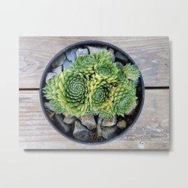 Succulents in a Black Planter Metal Print