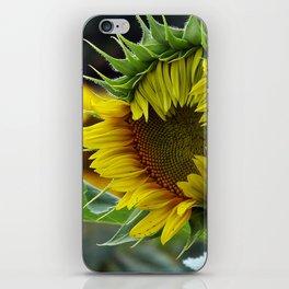 Sunflower Unfolds iPhone Skin