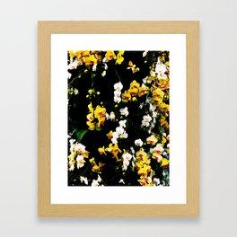 Orchid Celebration Framed Art Print
