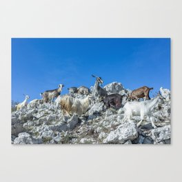 Climbing on the top of Redentore Mountain Canvas Print