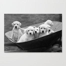 Labs Puppies In A Wheelbarrow Canvas Print