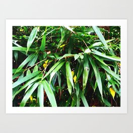 mountain palm Art Print