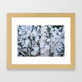 annual honesty Framed Art Print