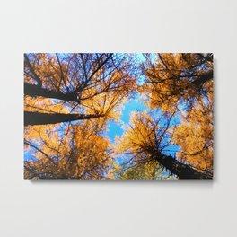 trees throw blue sky landscape Metal Print