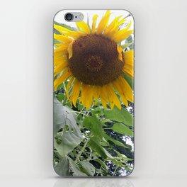 Oklahoma Sun iPhone Skin