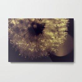 dusk  - dandelion Metal Print