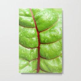 Swiss Chard Leaf Metal Print