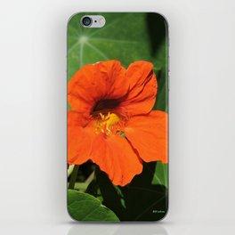 Nasturtium iPhone Skin