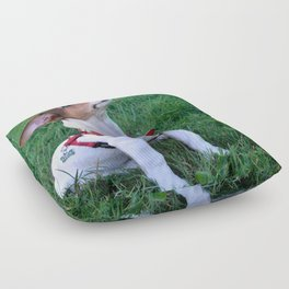 adorable jack russell terrier  puppy obedient dog Floor Pillow