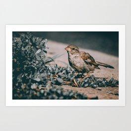 Summer Sparrow. Bird Photograph Art Print