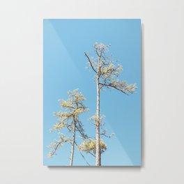 Tree , Auxier Ridge Trail, Red River Gorge, KY. 2015 Metal Print